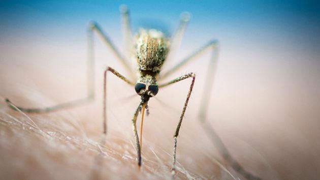 Kreće suzbijanje komaraca na području Općine Preko